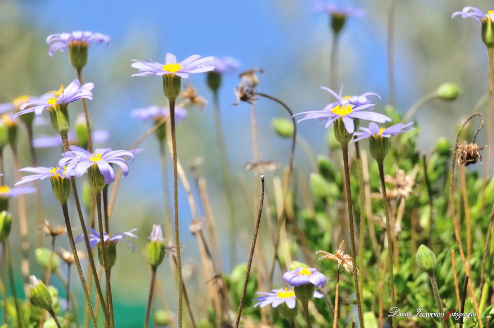flowers in the field.jpg