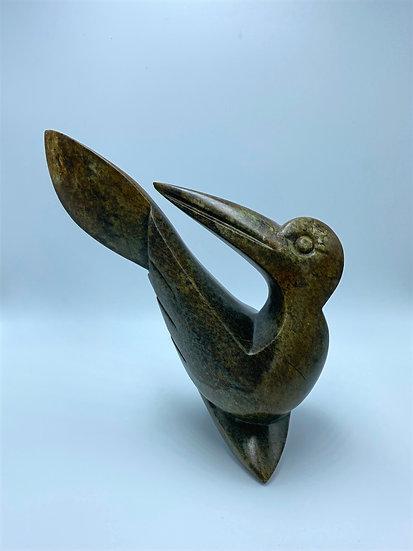 Landed Pelican