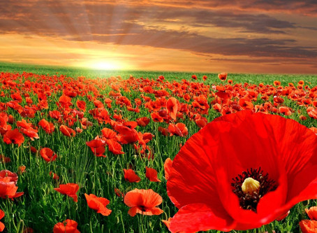 Don't Be Afraid to Be the Tallest Poppy in the Field