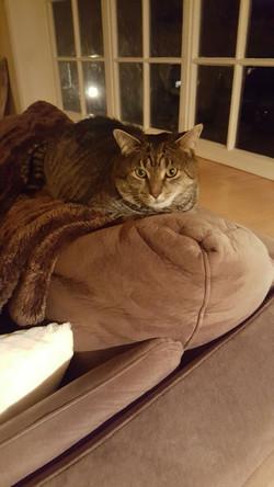 cat sitting timonium