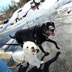 dog walking timonium