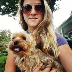 yorkie dog care towson