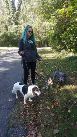 pack walks Lutherville