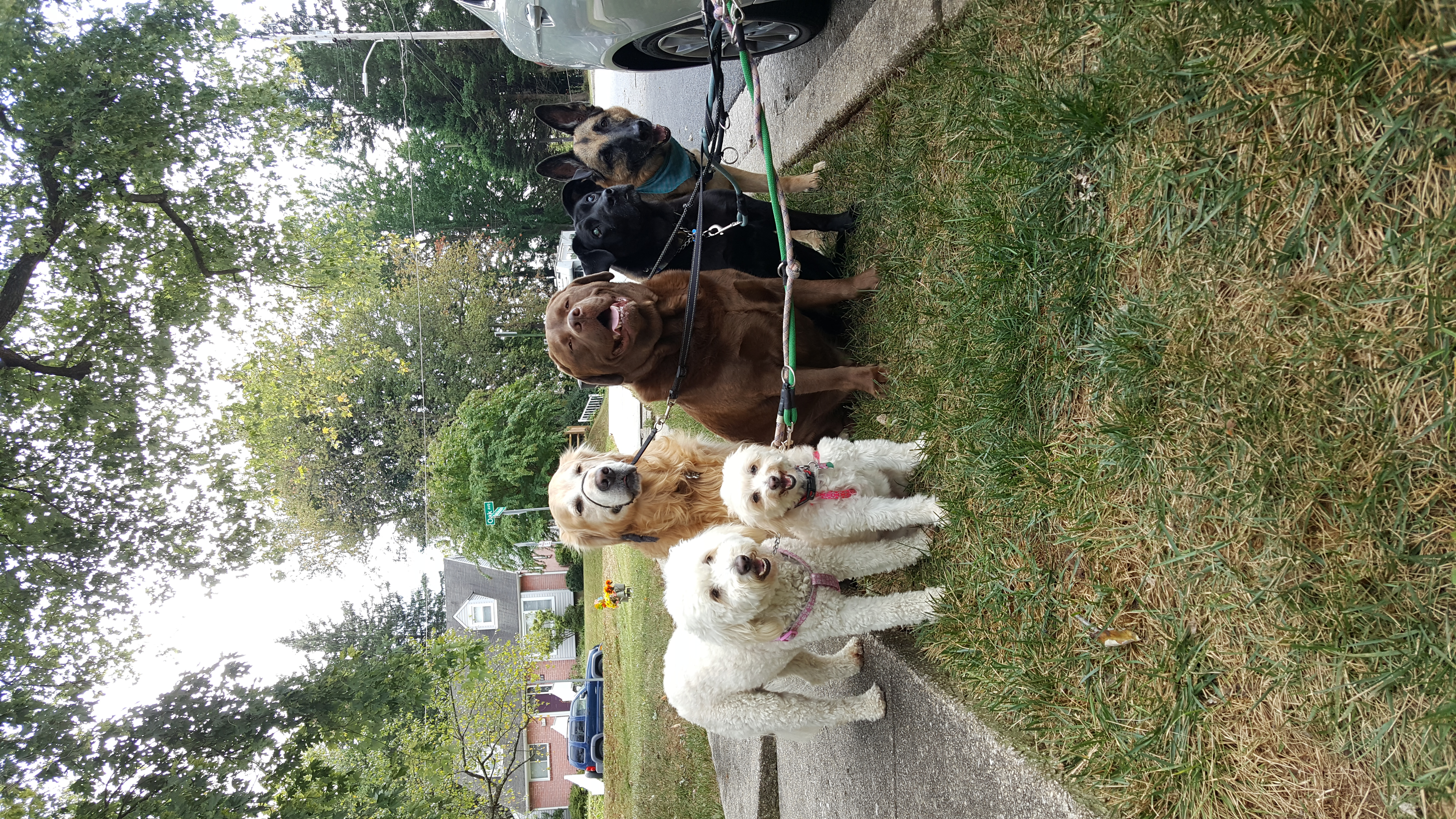 dog pack pikesville
