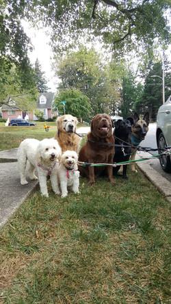dog pack pikesville