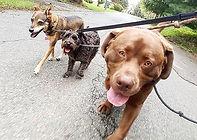 🐶💖 #packlife #bestlife #squad #dogwalk