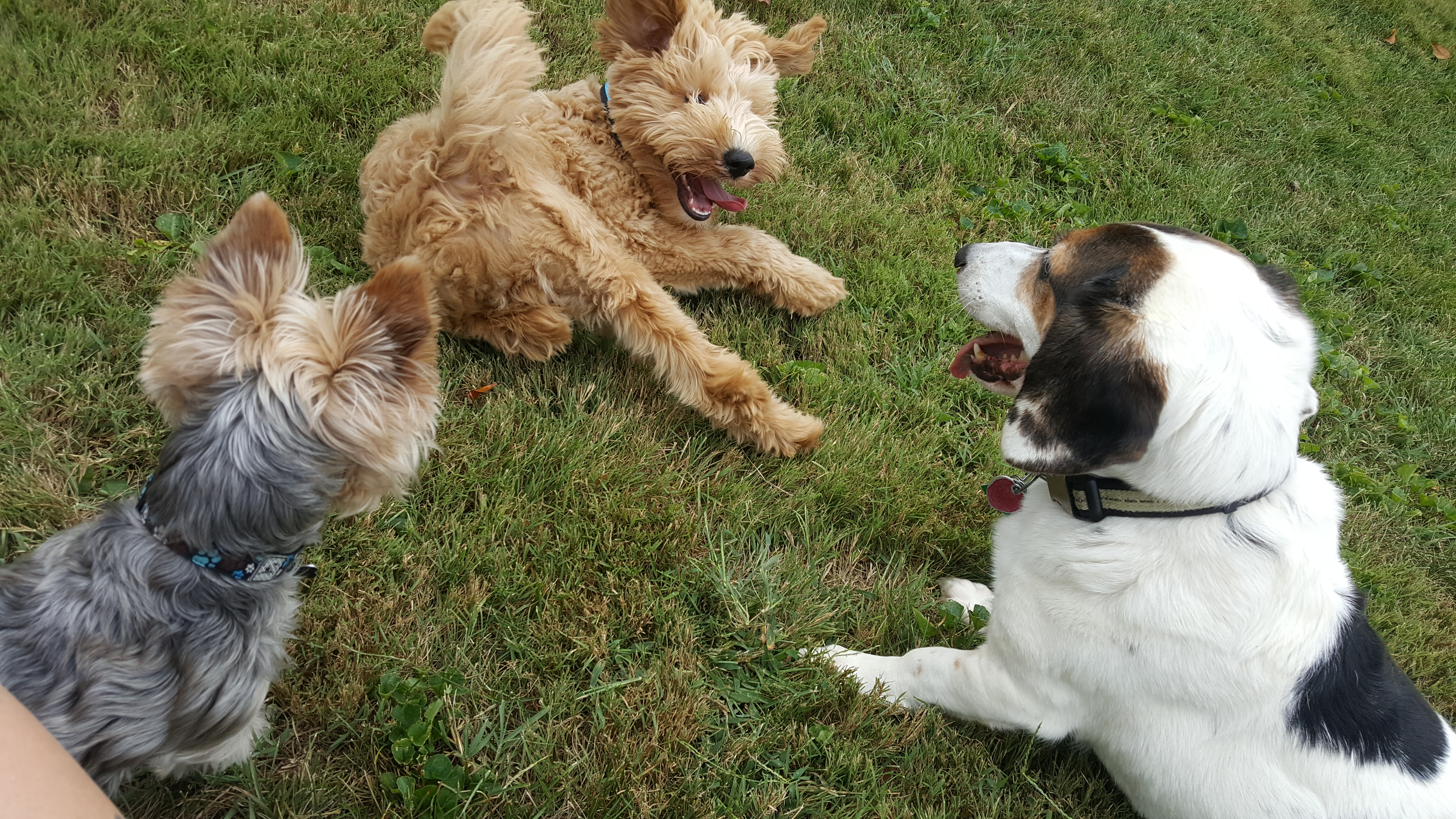 dog socialization lutherville