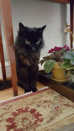 cat sitting towson