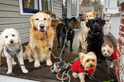 dog pack walking ruxton