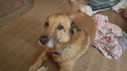 Dog sitting Towson