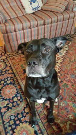 dog care Towson