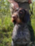 Unsere Hunde Wespe.jpg