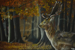 Autumn Forest Stag