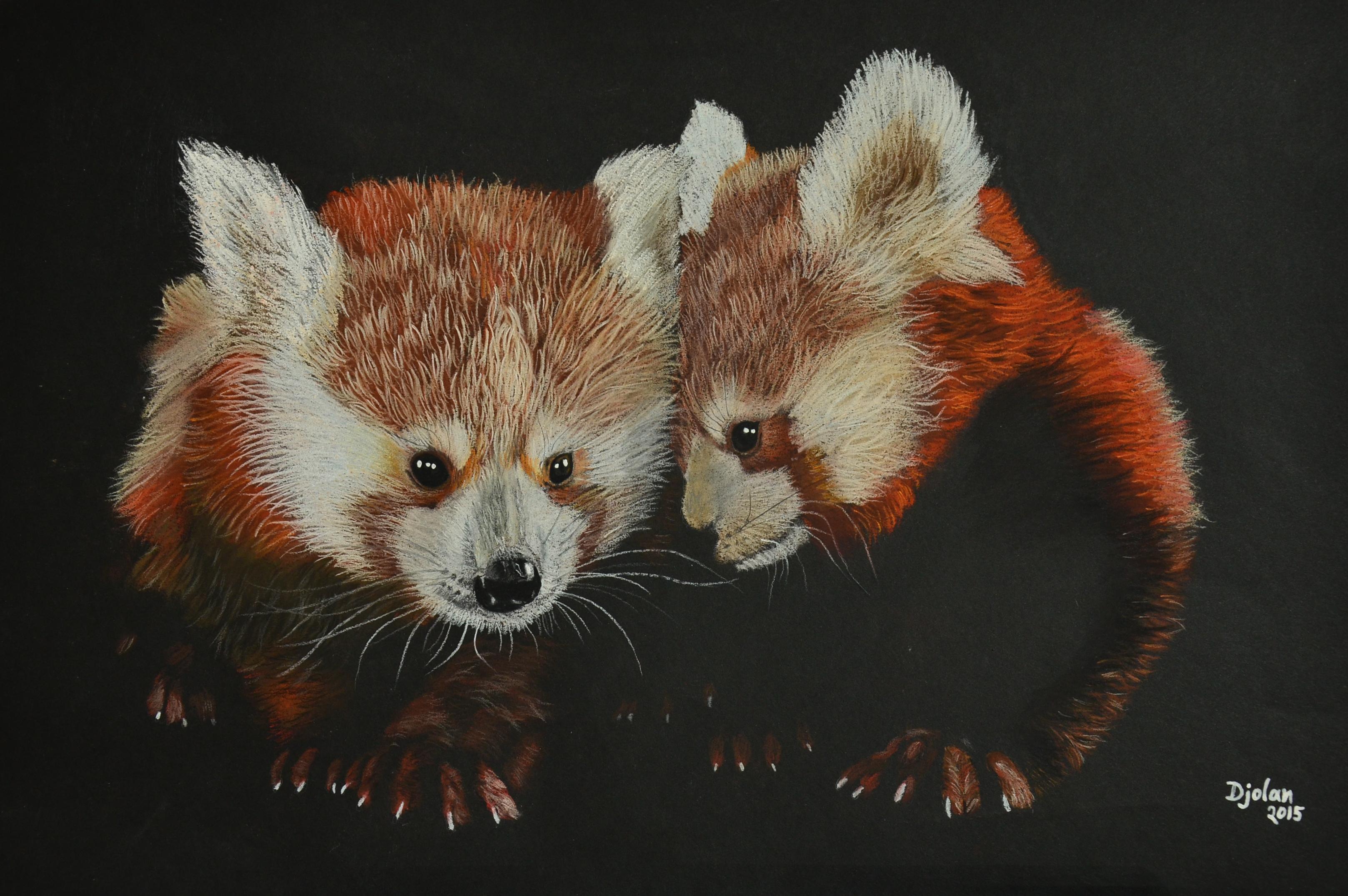 Red Panda1