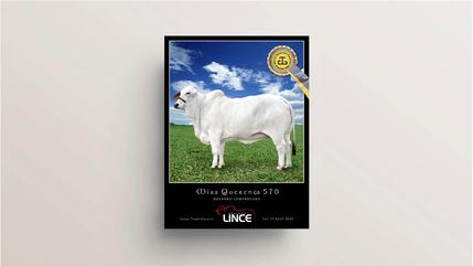 Anúncio revista | Cliente Lince