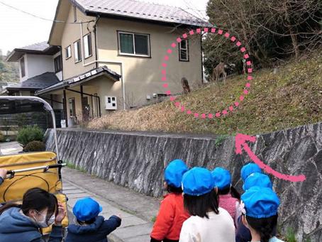 おさんぽ(鹿さん発見!)