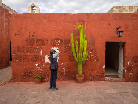 A woman stops to photograph a cactus in Santa Catalina Monastery, Arequipa