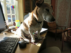 Dog on mouse mat 006.JPG