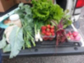 local organic spring csa share