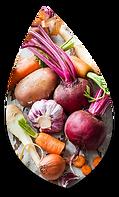 Légumes racine