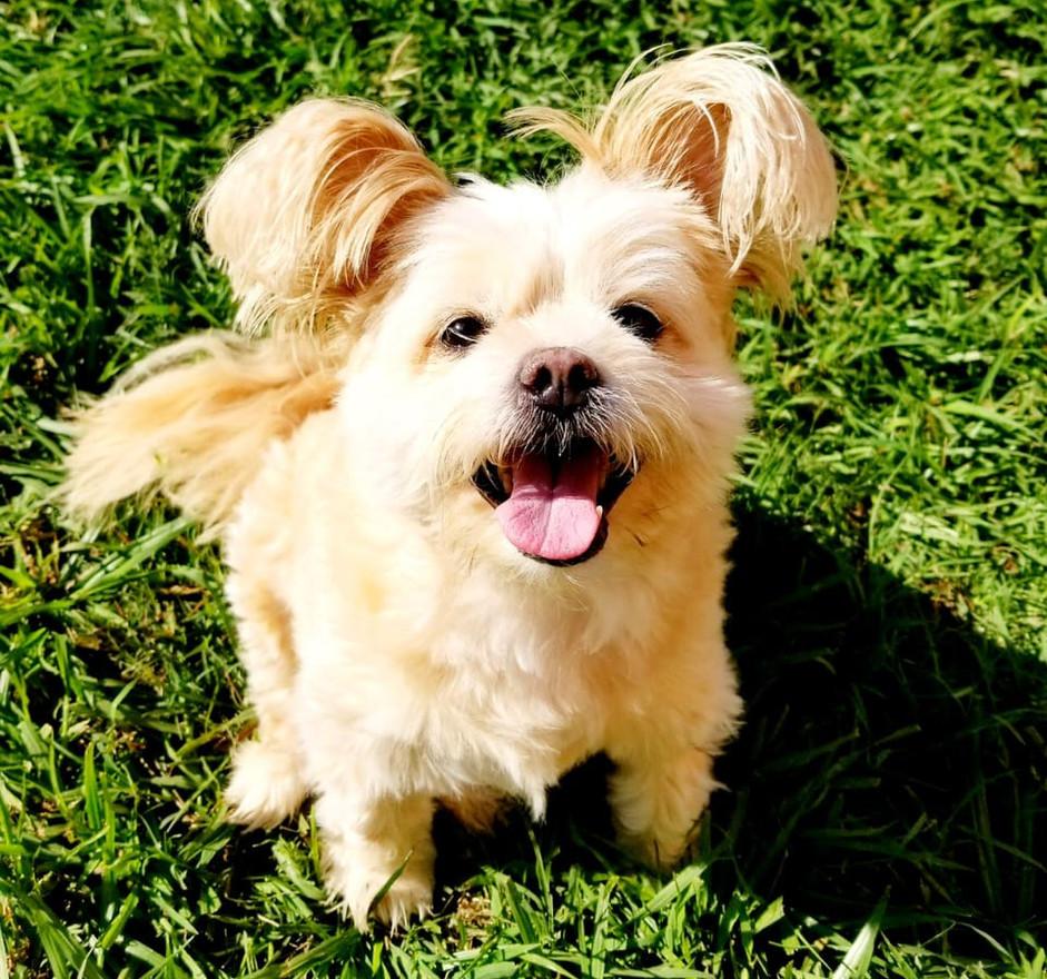 Puppy Dreams Pic_07.jpg