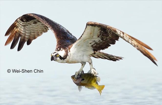Wei-Shen Chin