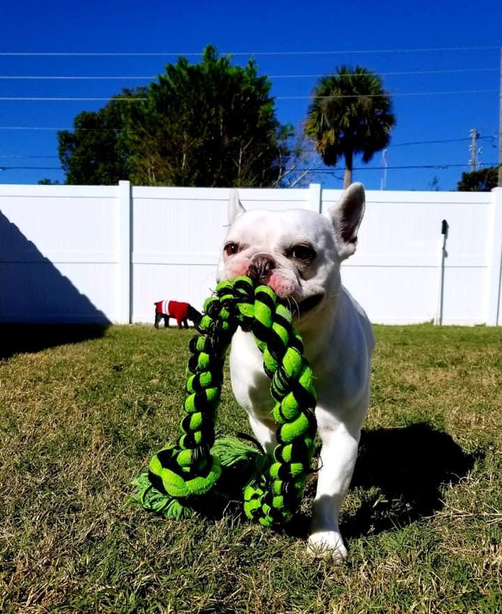 Puppy Dreams Pic_06.jpg