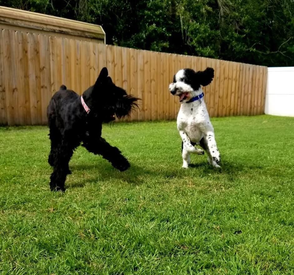 Puppy Dreams Pic_03.jpg