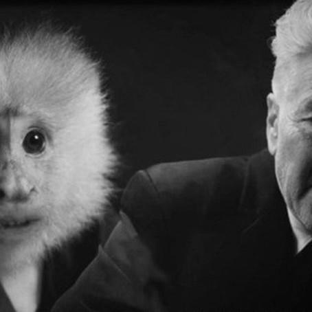 Em novo filme, David Lynch dialoga com macaco