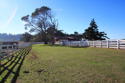 Pastures with 4 rail wood fencing