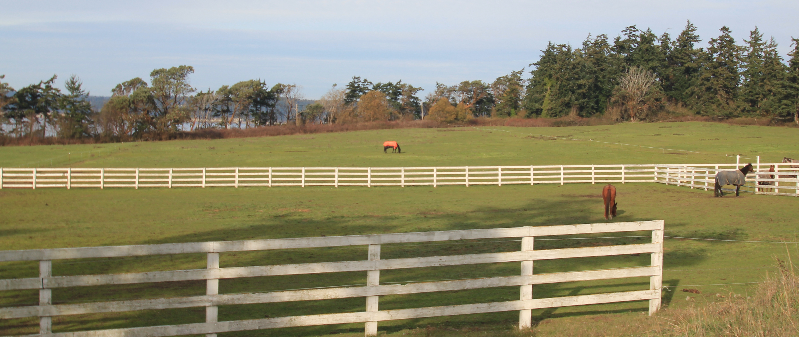 Large grassy pastures