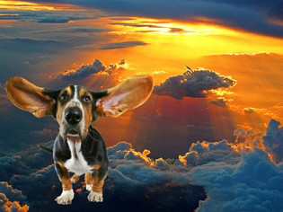 Of Creation Myths, Rivotril™ & Dogs