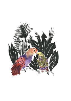 Péroquets de Bali