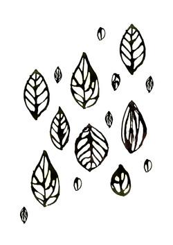 feuilles d'Amazonie