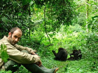 The process of Chimpanzee habituation