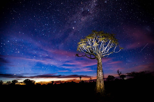 Quiver Tree and Stars