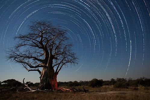 Baobab Startrails