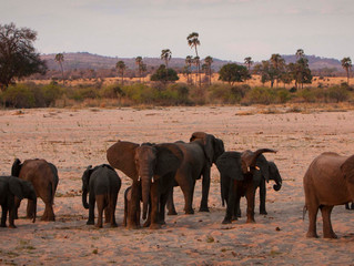 Ruaha National Park: Tanzania's Land of Giants