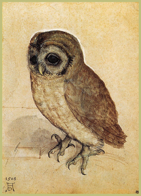 The Little Owl by Durer Notecard
