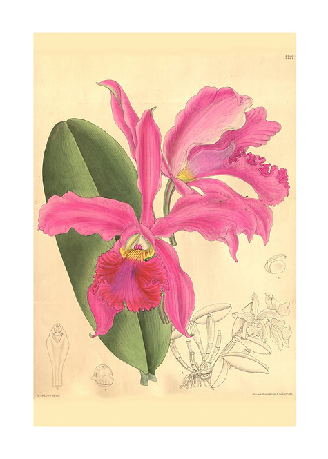 Bright Pink Orchid Notecard