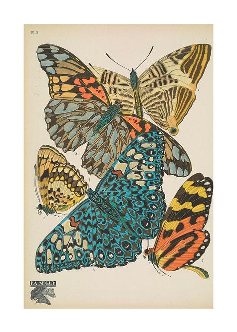 Papillons Notecards