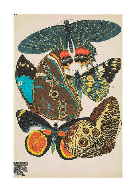 Papillons Notecard