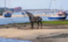 Lifeboat Horse