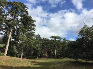Holkham pinewoods