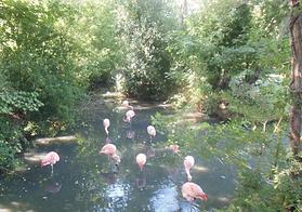 Amazona zoo.png