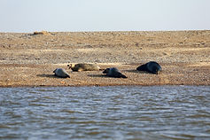 Morston Seal Trips Norfolk