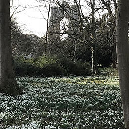Walsingham Abbey | Snowdrops | Norfolk Coast