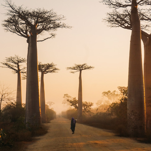 This Weekend We Virtually Visited Madagascar