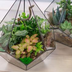 Флорариум с лиственными и суккулентами (