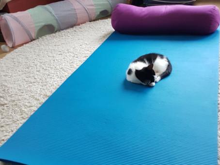 Yogamatta i vilorummet